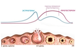 Что такое прогестерон? Роль прогестерона в женском организме.
