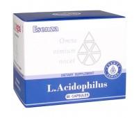 L.Acidophilus ( Л.Ацидофилус) - источник «дружественных» бактерий